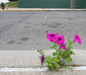 When the world is mostly concrete, it's pleasant to see how color and vitality breaks through. That's the love of Jesus.