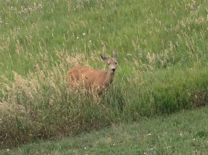This deer was eating just feet from the restrooms at the Mother Cabrini Shrine on Wednesday, Aug. 1, 2018.
